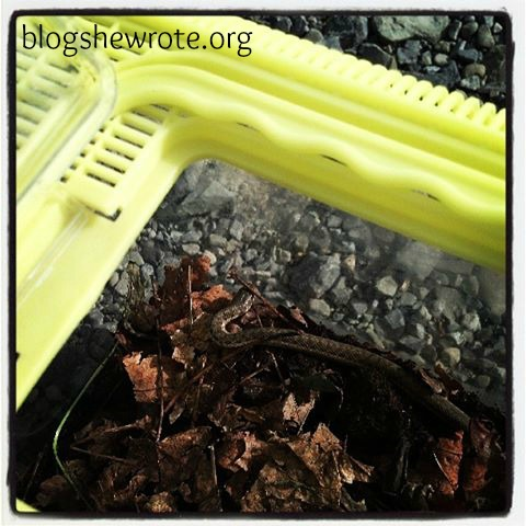 Blog She Wrote: Summer Bucket List