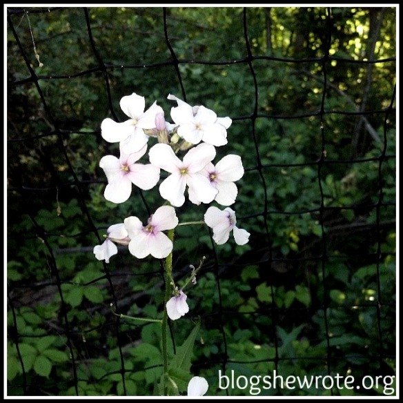 Blog She Wrote: Wildflowers Art & Nature Study